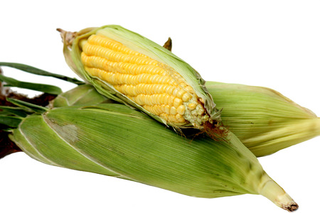 shucked: Sweet corn isolated on a white background Stock Photo