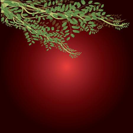 ivy vine: Vine leaf green ivy in the red.