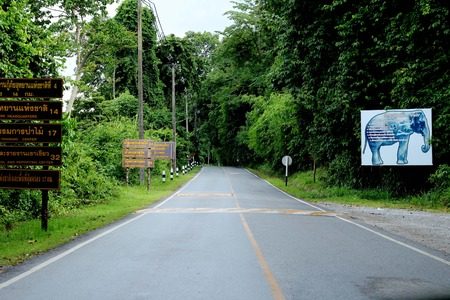 yai: Up the road in the forests of Khao Yai National Park. Attractions in Thailand.