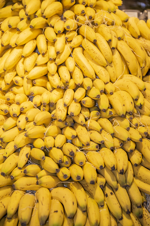 Fully ripe platanos to consume. Products of agriculture exposed to sale in public, perfectly presented in their shelves that show all their nutritional wealth.