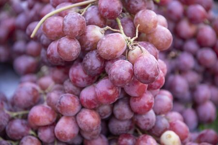 Exceptional freshly harvested pink grape from the vine. Coming from the vineyards of the orchards of Vega Baja, Almoadí, Alicante and exposed for sale to the public. Banque d'images