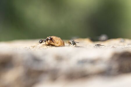 Ant looking for food in habitable environments located in an open space garden making their appearance in all social settings Stock Photo