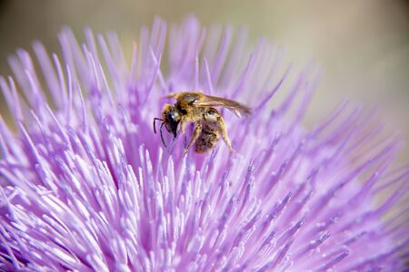 The colorful and striking flower blooms in the spring when a wasp flutters for pollen. Imagens