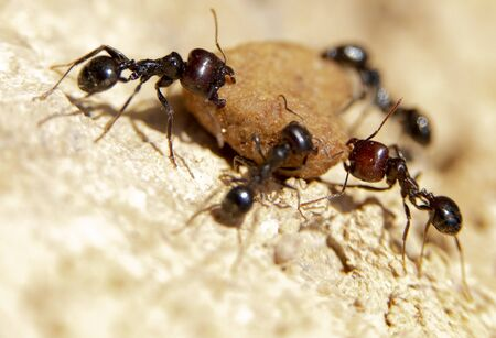 Ant in search of food at dawn around the anthill