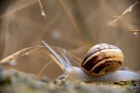A lone snail crosses the rocky wall after the rain has just fallen into the garden.