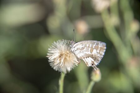 Butterfly in spring perched on a dandelion flower in a garden with green plants