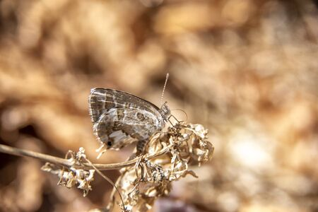 Butterfly perched on withered flowers in a dry and neglected garden Stock fotó