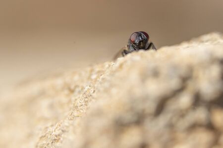 A close up of a common house fly with its eyes protruding in an open space above a solitary and difuse white rock