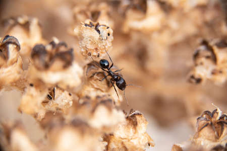 Daily fight of insects for survival.Ants in search of food at dawn around the anthill above a solitary white rock