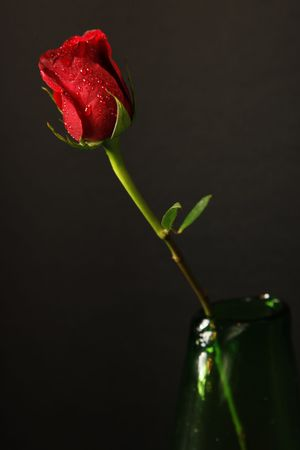 A single stemmed red rose in a green vase with a black background