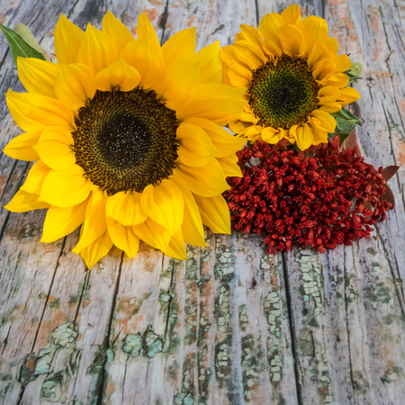 quadratic: Autumnal background of wood with blooms at the top Stock Photo