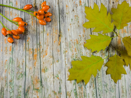 Autumnal background: oak leaves and fruits of dog rose on wooden background