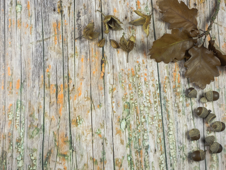 Autumnal background: oak leaves and acorns on wooden background
