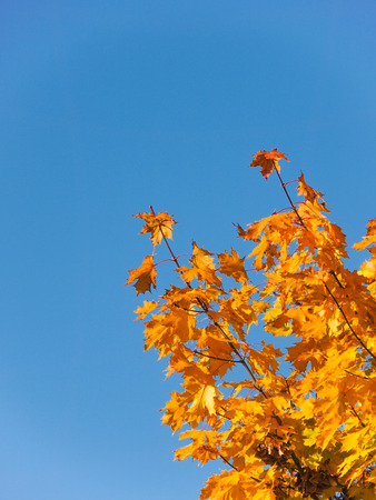 Blue sky with autumnal leaves to use as background Stock Photo