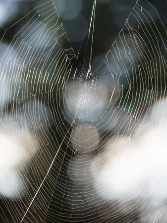 spiderweb: autumn Spiderweb as a symbol of fall Stock Photo