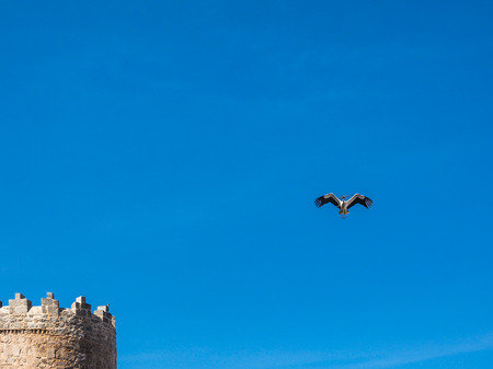 heritage protection: Pinnacle of a town wall and flying stork on blue sky