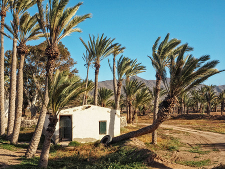 Old white house in between palm trees at Fuerteventura, Canary Islands