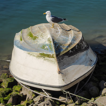 reverse: Herring gull is sitting on a fishing boat turned Stock Photo