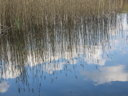 Mirroring of reed and blue sky with clouds in a lake in Germany Stock Photo