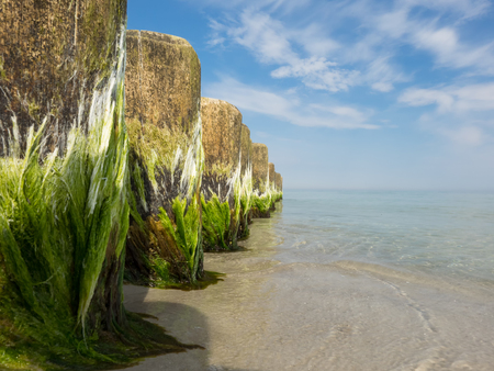 seaweeds: Close-up of breakwaters in the Baltic Sea