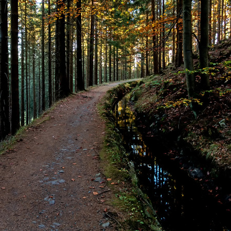 Hiking trail in the forest of the Harz mountains Фото со стока