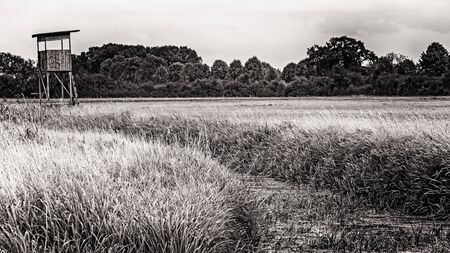 Monochrome image of a high stand in the meadows of Northern Germany 版權商用圖片