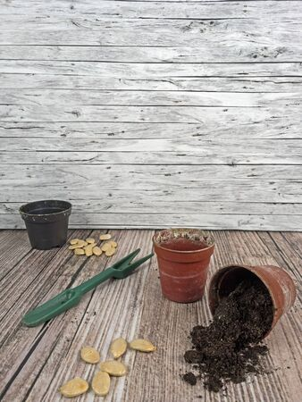 Background sowing plants for the garden in the springtime