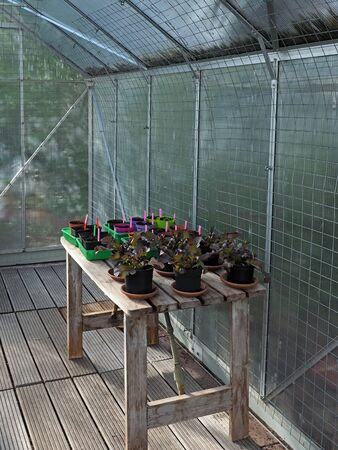 Inside a Greenhouse with salad and seedlings on a wooden table