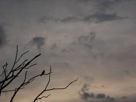 Silhouette of a blackbird on a branch at backlight Standard-Bild