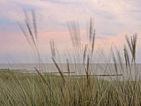 marram grass (motion blur) in front of the Baltic Sea in Mecklenburg-Western Pomerania, Germany