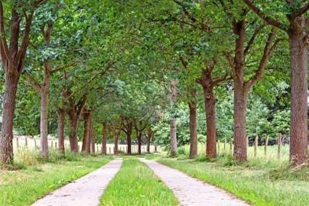 Tree avenue in Mecklenburg-Western Pomerania, Germany