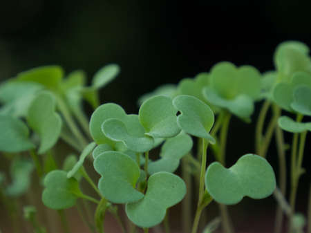 close-up of some seedlings