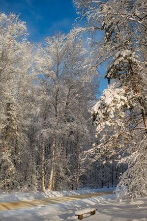 Beautiful winter snow forest with blue sky on the background
