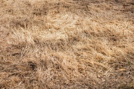 Dry grass field pasture. Early spring landscape