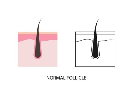 Hair follicle vector icon flay and line style Illustration