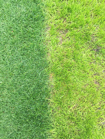 two tone: two tone grass