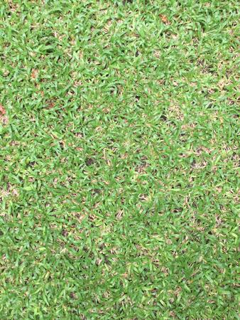 light green grasses Reklamní fotografie