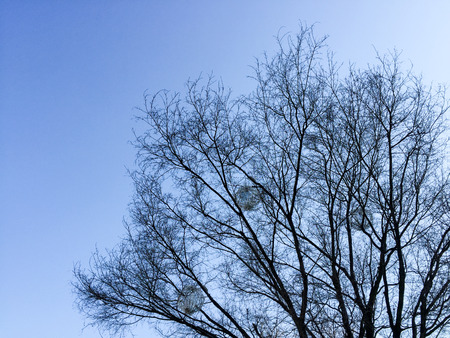 spiritless: blue sky Stock Photo