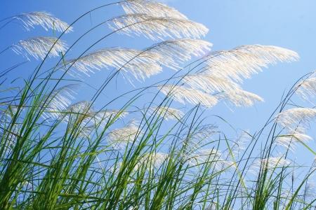grass flower photo
