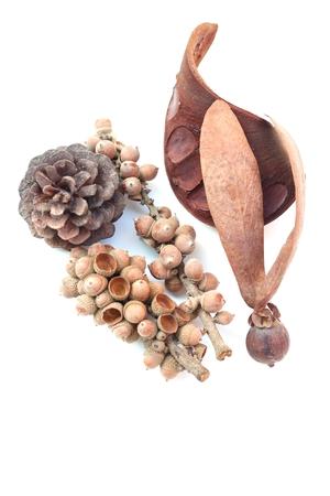 fagaceae: Fagaceae