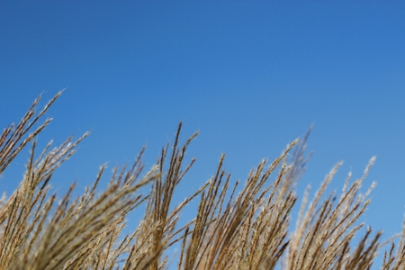 clearly: Close up of grass flower with clearly sky. Stock Photo