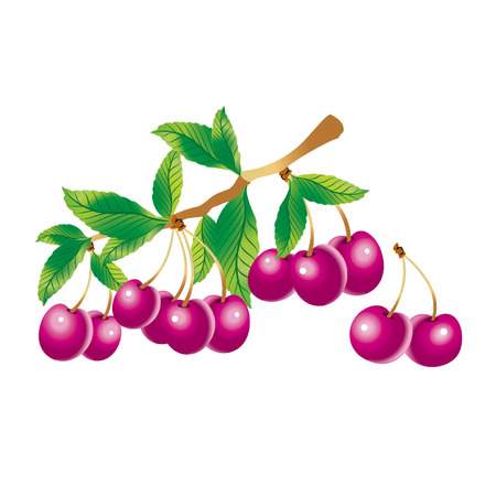 confiture: Vector image of a sprig of cherry