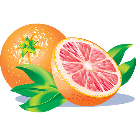 Vector image of two grapefruits Çizim