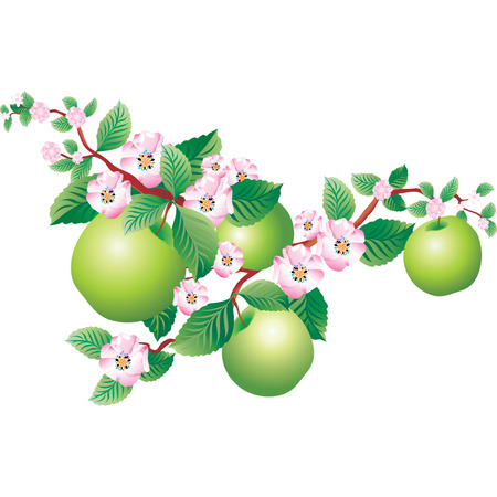 сделанный со вкусом: Vector image of a blooming sprig of apple