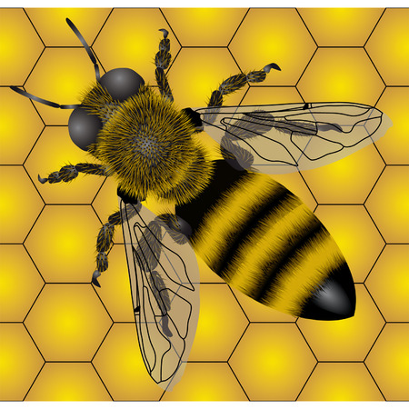 Seamless of bee Vector