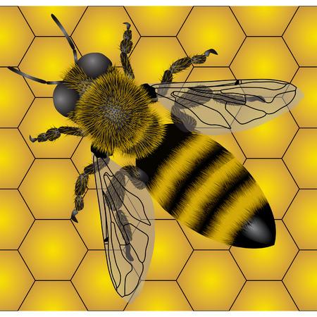 Seamless of bee Vector