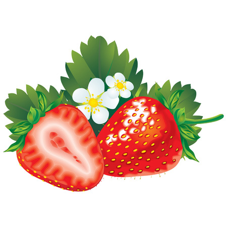 Vector image of fresh red strawberry