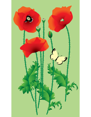 poppy field: Vector image of scarlet poppy with a butterfly