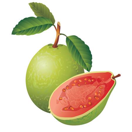 guayaba: Imagen de un vector de guayaba