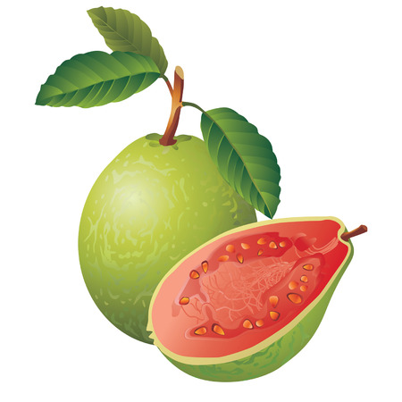 Vector image of a guava Çizim